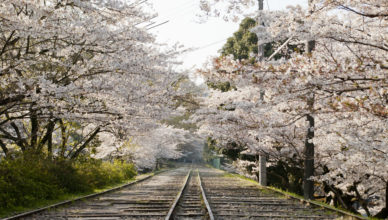桜並木と南禅寺のインクライン