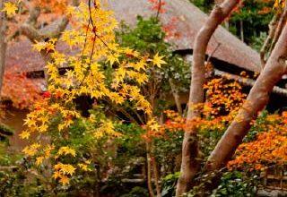 祇王寺の秋