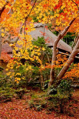 秋の祇王寺