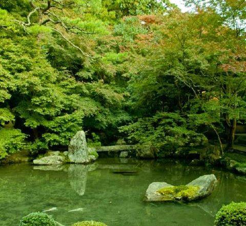蓮華寺庭園の池