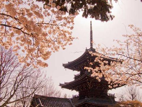春も素敵な寺院です