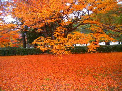 京都御所の風景