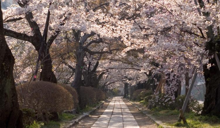 銀閣寺・哲学の道エリアのおすすめ散策コース