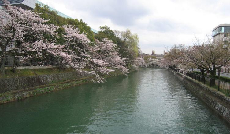 京都のおすすめ桜スポット 2平安神宮と岡崎