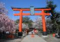 京都のおすすめ桜スポット 7平野神社