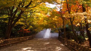 京都紅葉めぐり2