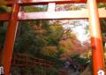 京都紅葉めぐり3