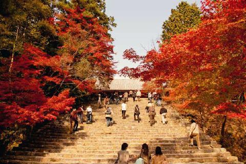 神護寺 秋の風景