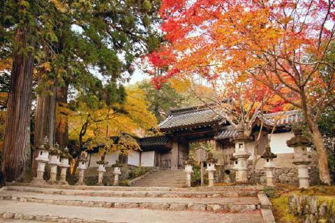 秋の西明寺 3